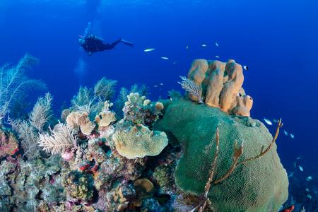 SCUBA diver over a coral reef