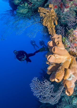 SCUBA divers on a vertical coral wall in a tropical ocean
