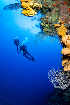 SCUBA divers exploring a deep, vertical coral wall