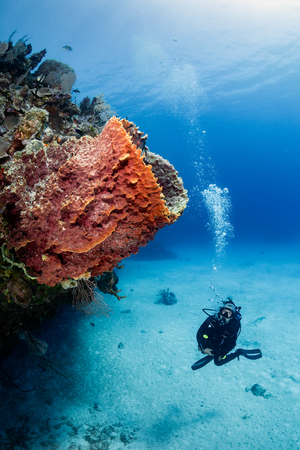 Female SCUBA diver and Sponge on a tropical coral reef Imagens