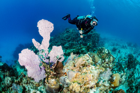 seafan: Female SCUBA diver next to a large sea fan Stock Photo