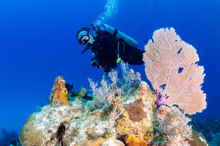 seafan: Young female SCUBA diver near a seafan on a tropical coral reef