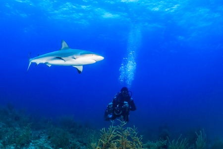 SCUBA diver with a large underwater camera close to a reef shark