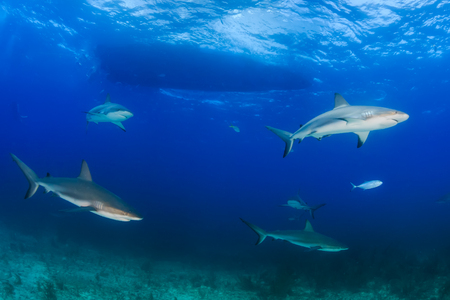 Sharks circling underneath a dive boat