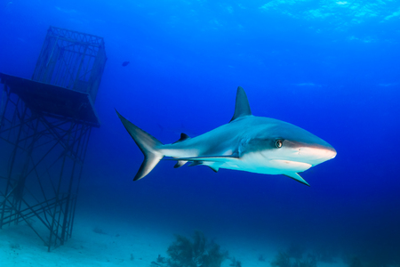 Sharks swimming around an underwater manmade structure Stock Photo