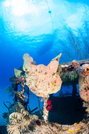 ship wreck: An old, coral encrusted shipwreck with a dive boat moored above