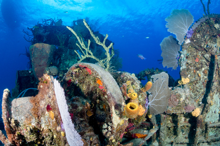sunken boat: An old, coral encrusted shipwreck