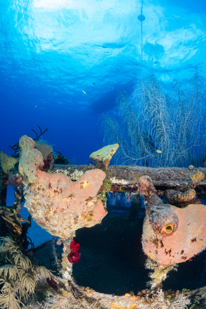 seafan: An old, coral encrusted shipwreck with a dive boat moored above