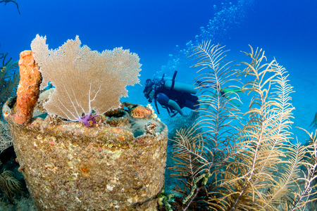 seafan: SCUBA Divers around an underwater shipwreck Stock Photo