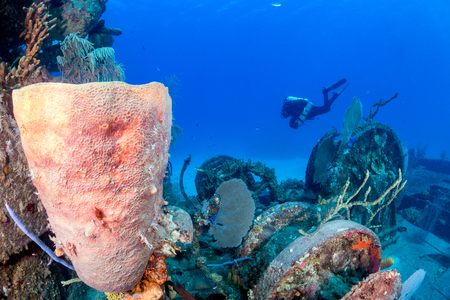 seafan: Technical SCUBA diver swims past an old, sponge and coral encrusted shipwreck