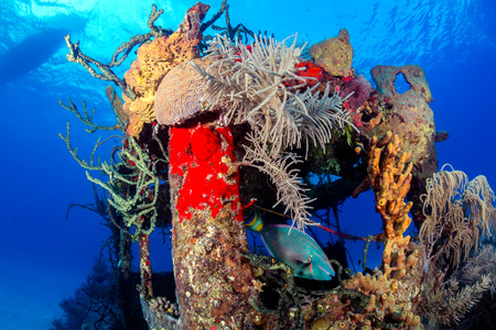 An old, coral encrusted shipwreck