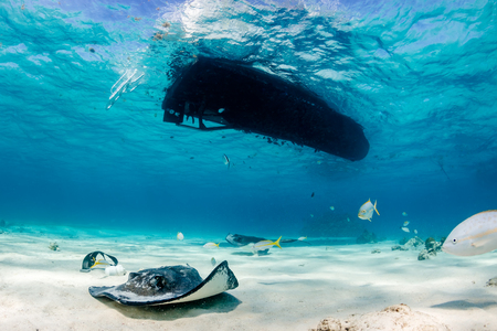 stingrays: Tropical fish and stingrays swim underneath a boat