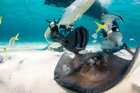 Tropical fish and stingrays swarm around divers on the sea floor