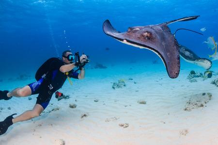 SCUBA divers and Stingrays Zdjęcie Seryjne