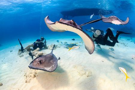 SCUBA divers entouré par Stingrays