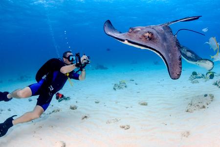 stingrays: SCUBA diver and Stingray Stock Photo