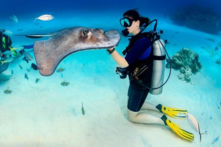 SCUBA diver and Southern Stingray Stok Fotoğraf