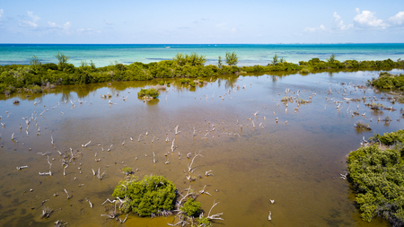 Aerial view of a flooded mangrove swamp