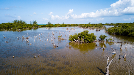 A flooded, coastal mangrove forest in a tropical location