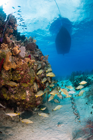 School of colorful tropical fish underneath a dive boat on a tropical coral reef Stock Photo