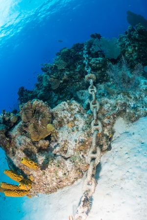keywords: An anchor chain from a cruise ship carelessly dropped causing damage to an otherwise healthy tropical coral reef. Careless dropping of anchor is a serious threat to shallow water reef around the world