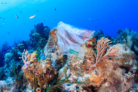 Poluição por plásticos: - um saco de lixo descartado flutua em um recife de coral tropical, apresentando risco para a vida marinha