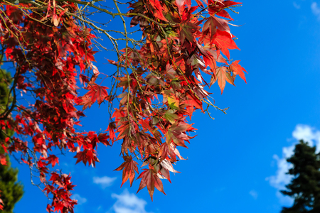 Vividly colored autumn leaves