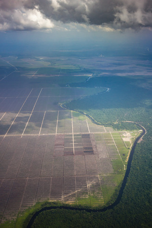 Deforestation in a tropical rainforest due to illegal logging and palm oil plantation Reklamní fotografie - 88689718