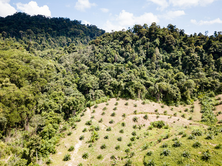 Aerial view of deforestation caused by palm oil plantations being hacked out of the jungle
