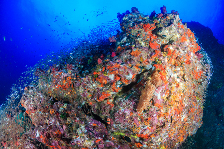 A vibrant, colorful tropical coral reef