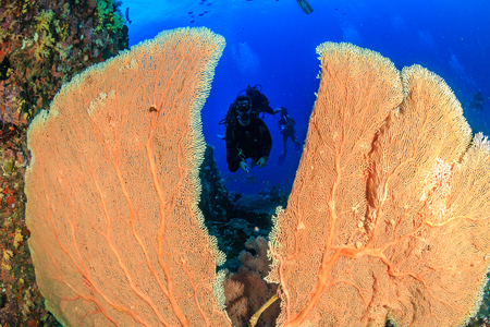SCUBA diver and a large seafan on a coral reef