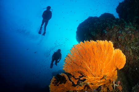 SCUBA divers above a sea fan on a coral reef Stock Photo - 95150242