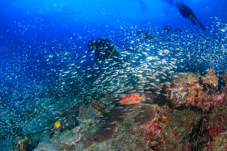 Grouper on a Coral Reef