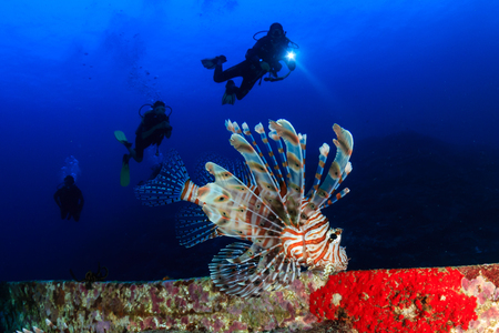 SCUBA divers and a large lionfish on an underwater shipwreck Stock Photo