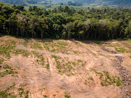 Aerial drone view of deforestation of a tropical rain forest to make way for palm oil and construction