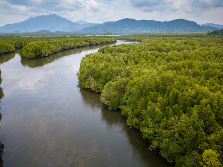 Drone aerial view of a huge, natural mangrove forest in Thailand