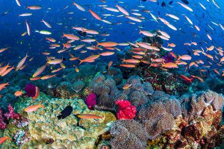 Colorful tropical fish on a healthy coral reef Stock Photo