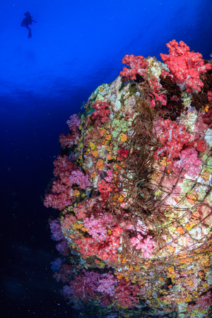 Delicate coral reef completely wrapped by an illegal and abandoned ghost fishing net