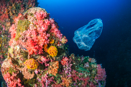 Plastic Pollution - a discarded plastic bag floats next to a colorful tropical coral reef