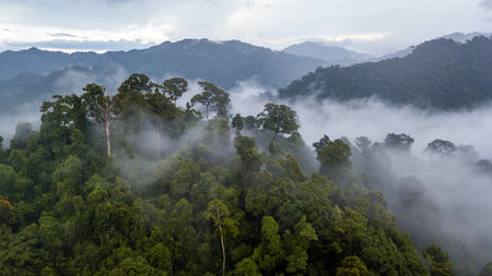 Aerial view of mist, cloud and fog hanging over a lush tropical rainforest after a storm Banco de Imagens