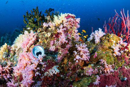 Discarded drink can polluting a colorful tropical coral reef Фото со стока