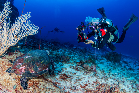 Female SCUBA diver photographing a Hawksbill turtle on a tropical coral reef