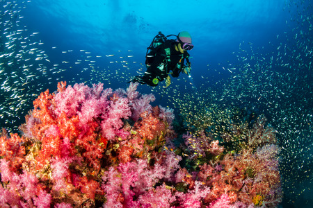 SCUBA diver swimming over a colorful, healthy tropical coral reef