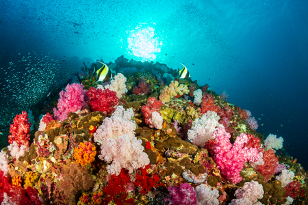 Beautiful, colorful tropical coral reef in Myanmar Stock Photo