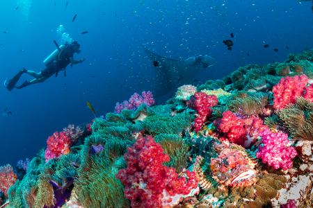 Ein Taucher mit einem Drachenkopf und einem riesigen ozeanischen Manta Ray auf einem tropischen Korallenriff