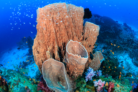 Large sponges on a healthy tropical coral reef 免版税图像