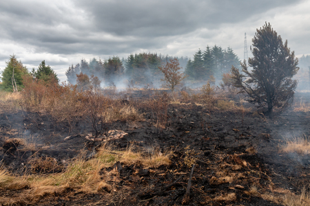 A smouldering grass fire next to a forest on a Welsh mountain