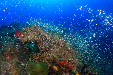 Beautiful, colorful and healthy tropical coral reef system full of fish and life