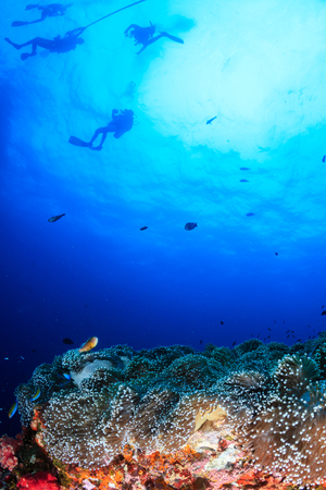 SCUBA divers swimming over a beautiful, colorful tropical coral reef at dawn Reklamní fotografie