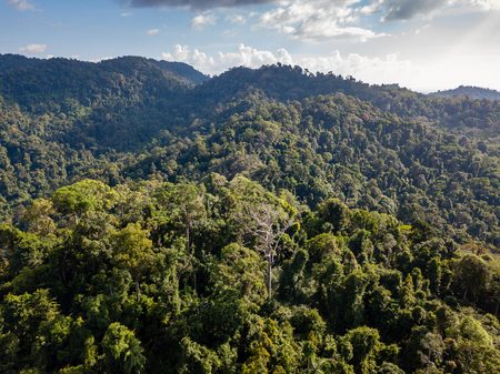 Aerial drone view of lush, green tropical rainforest